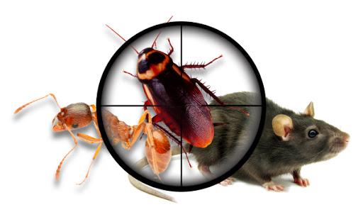 Sanering skadedjur allergi Vägglöss - bett, symptom - Avfukta24 -